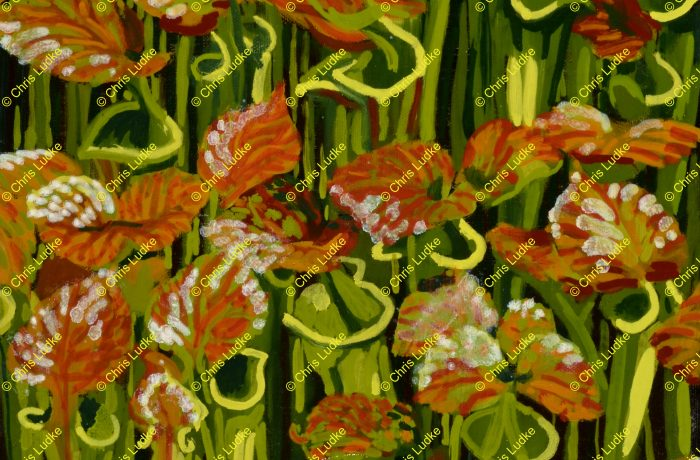 Pitcher Plants Sing Along